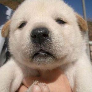 ぼーっとした表情の犬