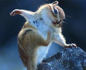 岩に手をついているハムスター